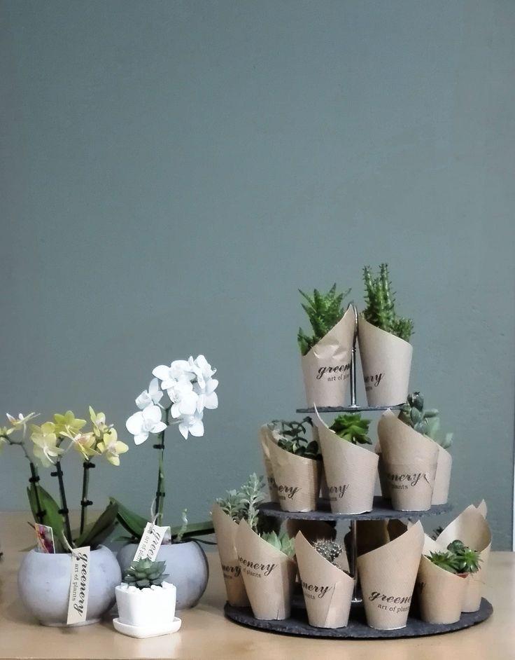 #greenery #greeneryartofplants #succulents #cactus #orchids #chania #crete