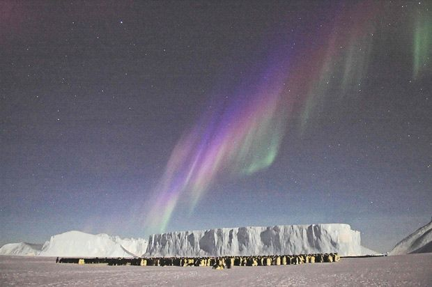 Male emperor penguins huddle against the cold below a spectacular Aurora australis display at Auster Rookery.