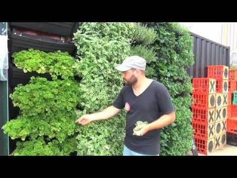 Wall Garden   Vertical Garden Installation & Operation