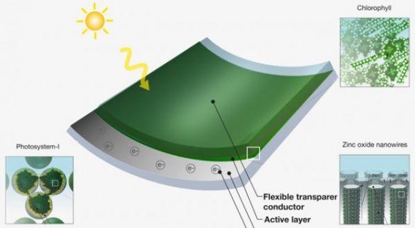 Paneles solares súper económicos: hechos con pasto