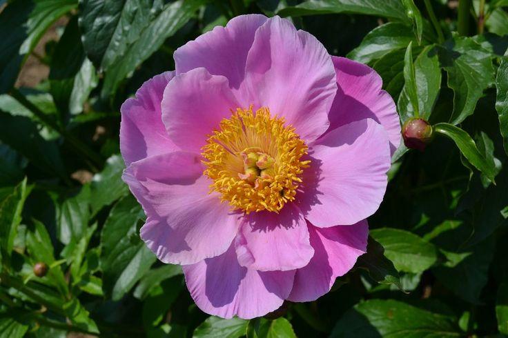 pink-chalice.jpg (1000×667)