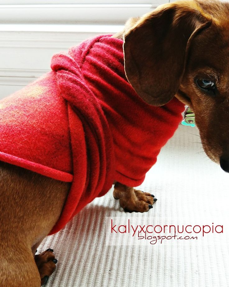 a cute and easy DIY weenie dog sweater idea that my boy and i came up with and posted on our blog, kalyxcornucopia.blogspot.com.  hope u enjoy :)