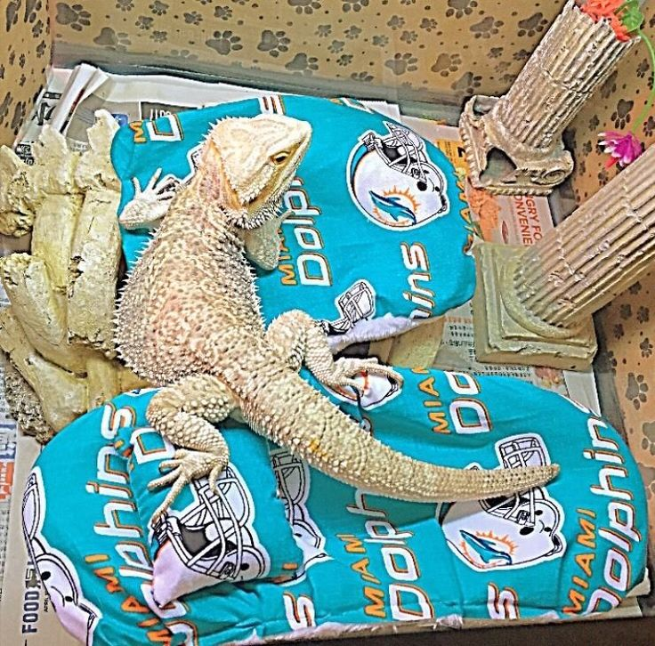 BEARDED DRAGON MIAMI DOLPHINS RESTING BED SET COVERS (NO
