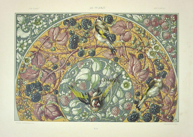 """""""Blackberries, Raspberries, Waxwing"""" from Anton Seder Die Pflanze Art Nouveau Prints 1890"""