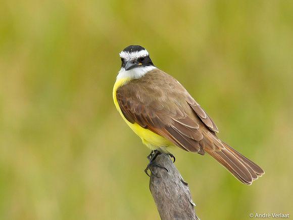 Video vogels en hun geluiden - Vogelplein BE-NL