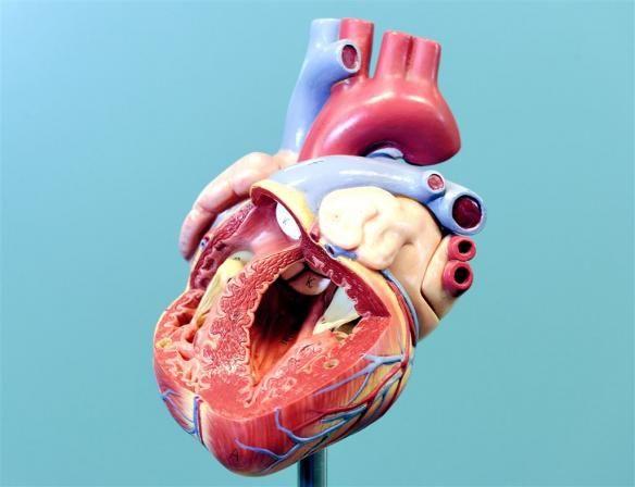 Baanbrekend onderzoek: nieuwe behandeling tegen hartfalen kan miljoenen mensen helpen