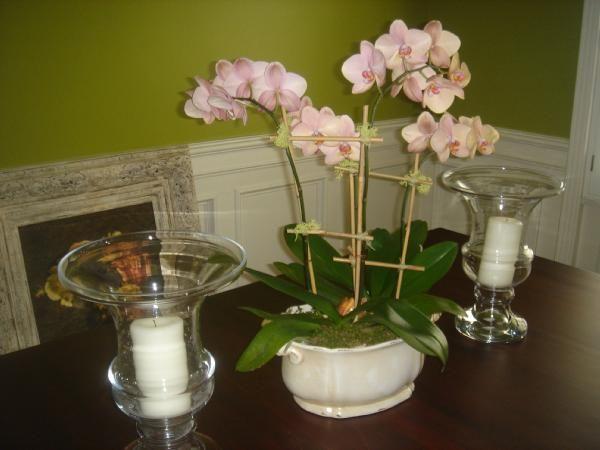 Best black white ball orchids images on pinterest