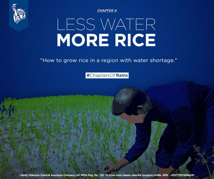 What happens when a crop like rice, which is one of the staples of India and requires humongous amounts of water for its cultivation, has to be grown in an area with scarce water? #ChaptersOfRains