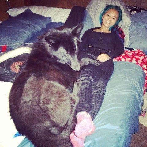 Giant Wolf Hybrid