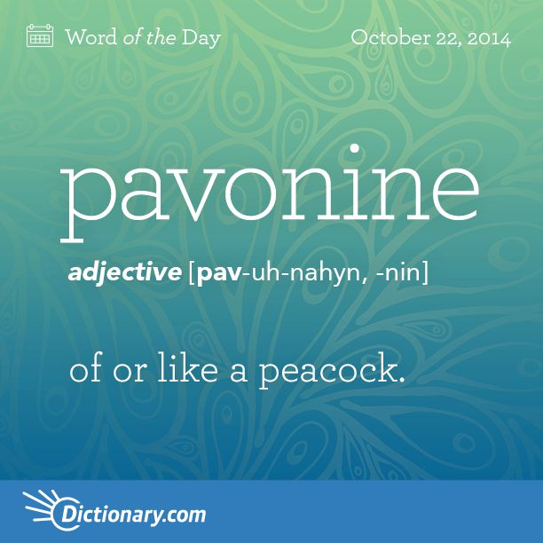 pavonine    \ PAV-uh-nahyn, -nin \  , adjective;     1. of or like a peacock. 2. resembling the feathers of a peacock, as in coloring.