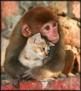 L'amicizia è come un fiore che dovrà sbocciare a Primaveratra canti di uccelli e lo scorrere di un ruscello!L'amicizia è come un castello di sabbiadifficilissimo da costruire, facilissimo da r