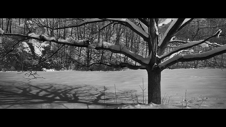 Ojcowski Park Narodowy // Ojców National Park #tree #drzewo #winter