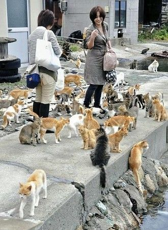 Wanna see the cat islands in Japan? Find out how to get Cat Islands in Japan: Aoshima and Tashirojima, boat time table, fee etc.