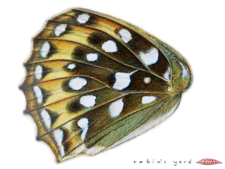 Argynnis aglaja (Dark Green Fritillary) hindwing underside (watercolor and color pencils, 14,8x21cm)
