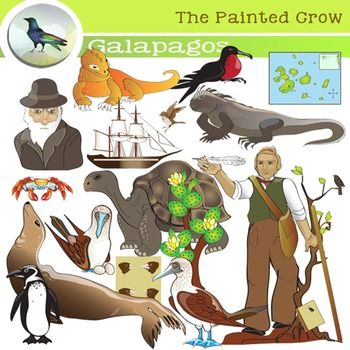 Galapagos Clip Art - Darwin - Evolution - Color & Blackline Illustrations