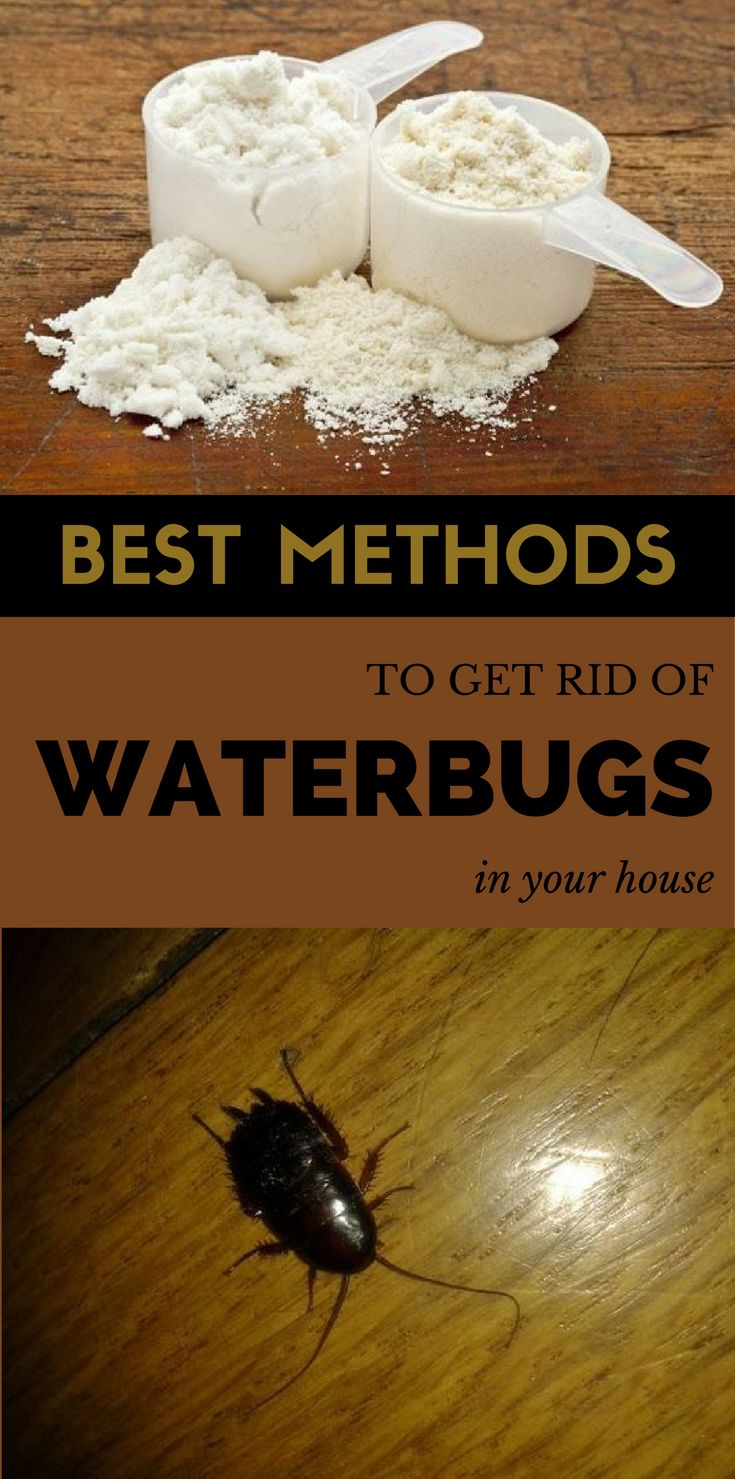 Best methods to get rid of waterbugs in your house