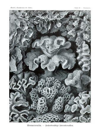 Corals - Ernst Haeckel