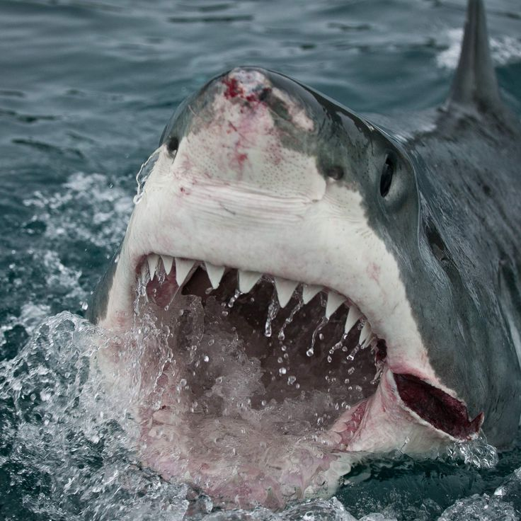 Most Dangerous Places For Sharks