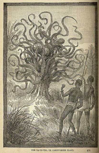 Man-eating Tree  A 19th-century illustration of a Ya-te-veo  What could be scary about a tree, right? They're so lovely and green, they make oxygen, and they are home to little squirrels and birds. Also, though, they can eat you! At least if you're unlucky enough to sit under a carnivorous Ya-te-veo plant.