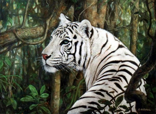 White Tiger | ENCYCLOPEDIA OF ANIMAL FACTS AND PICTURES: WHITE TIGER