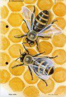 Házi állatok_37-Házi méh.jpg