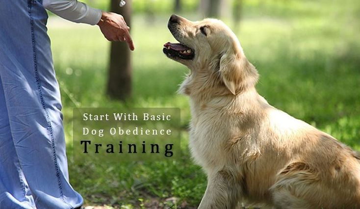 What Kind Of Commands Should Be Used To Start With #Dog #Obedience Training? Learn Basic Dog Obedience #Training Commands - #DogObidience