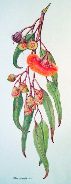 Eleni McLoughlin Colored Pencil