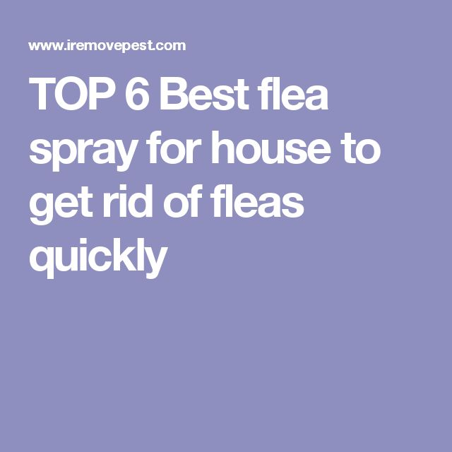 TOP 6 Best flea spray for house to get rid of fleas quickly