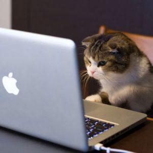 Jejaring Sosial Ini Hanya Dikhususkan Untuk Hewan Saja Lho!