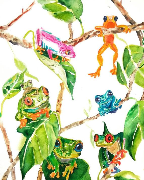 Colorful tree frogs original watercolor painting tropical