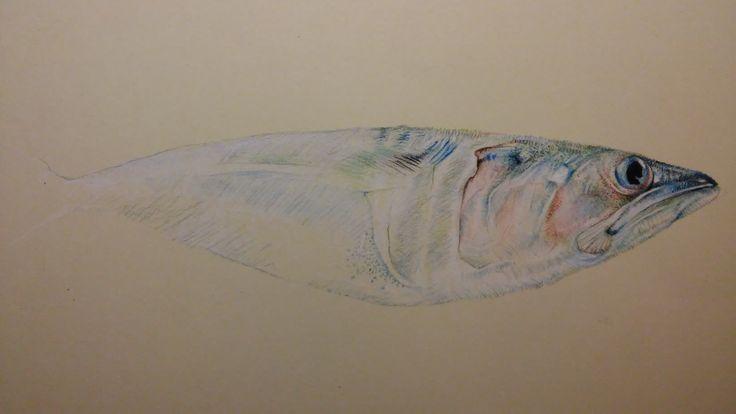 My mackerel drawn with chalk pastel