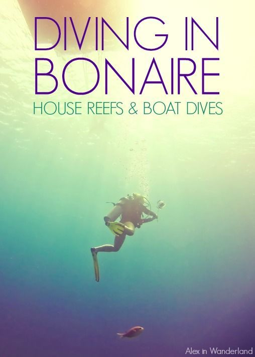 The abundance of shore dives make Bonaire one of the world's most unique diving destinations. But these aren't just the consolation prize for those who missed the boat--they're the main attraction of this underrated Caribbean isle.