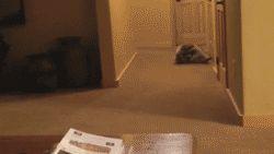 """Seré súper astuto y silencioso… ups. No, no es por aquí"". | 16 mapaches que son agentes secretos"