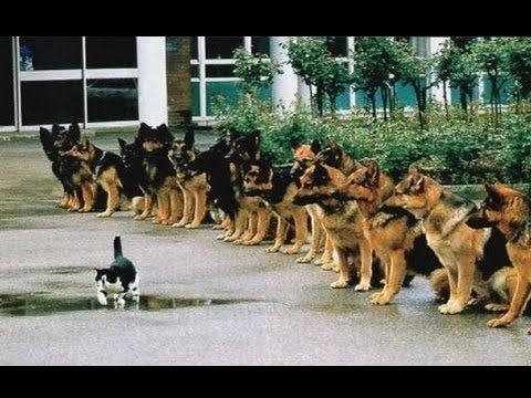 Most Disciplined Dogs Ever