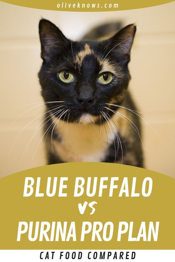 Purina Pro Plan Vs Blue Buffalo Cat Food Compared Which Is Best Cat Food Cats Purina