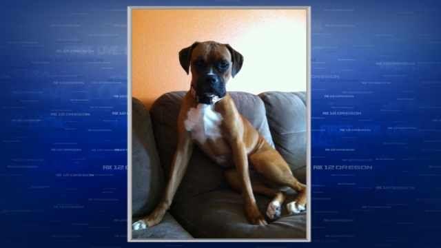 SW WA family desperate to find missing service dog - KPTV - FOX 12