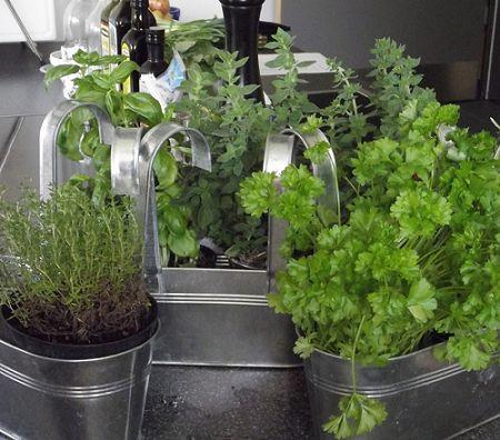 28 plantas medicinales y aromáticas que puedes cultivar en casa