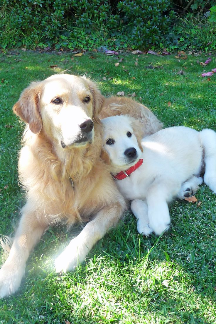 best must love dogs images on pinterest adorable animals cute