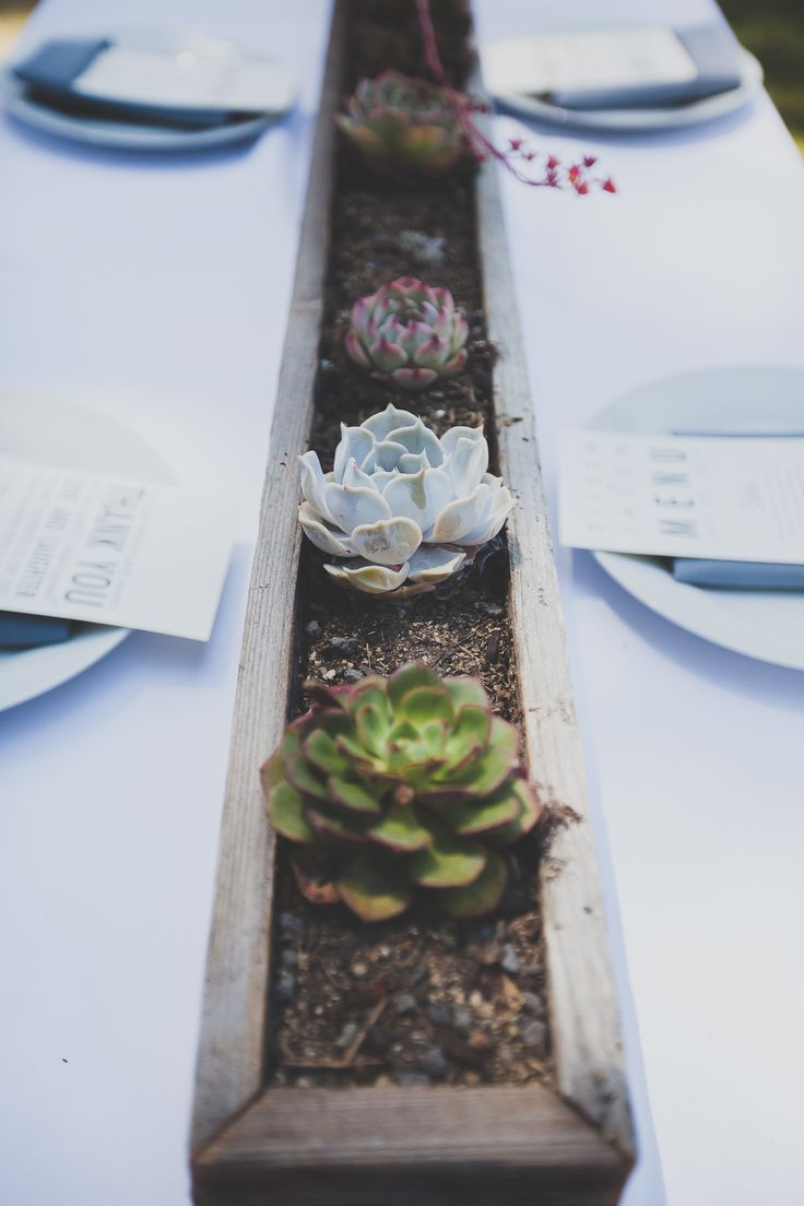 Succulents in a planter. Florals + Day Of Coordination: Blooming Soiree. Photography: Two Foxes Photography - twofoxesphotography.com