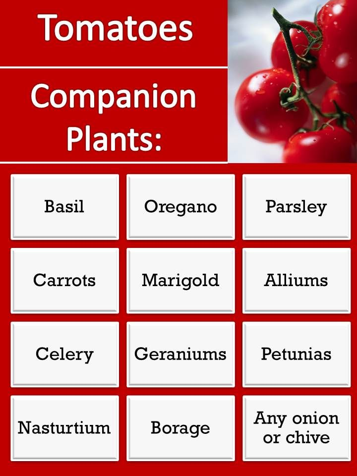 RHGS Outdoor & Gardening Blog: Companion Plants for Tomatoes