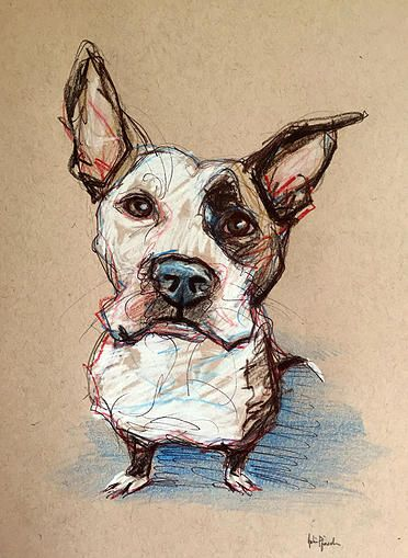 Shamrock - a Staffordshire Terrier Mix available for adoption http://www.nycsecondchancerescue.org/ pet portrait sketch - pencil, colored pencil and pen www.juliepfirsch.com