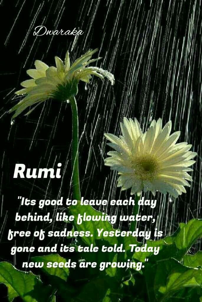 It's good to leave each day behind, like flowing water, free of sadness.  Yesterday is gone and its tale told. Today new seeds are growing. Rumi