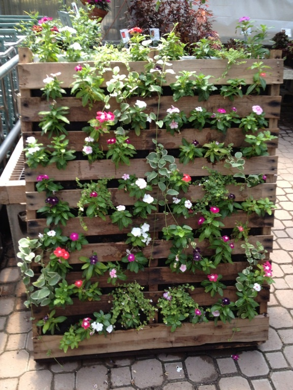 More flowers on a pallet.  I see this vertical garden idea on an apartment balcony.