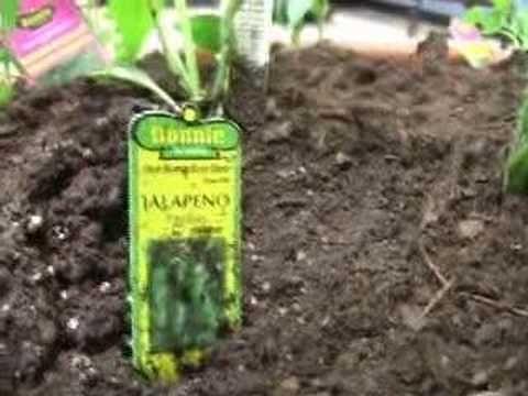 Plant a Salsa Garden: The Five Ingredients to Grow for Fresh Garden Salsa