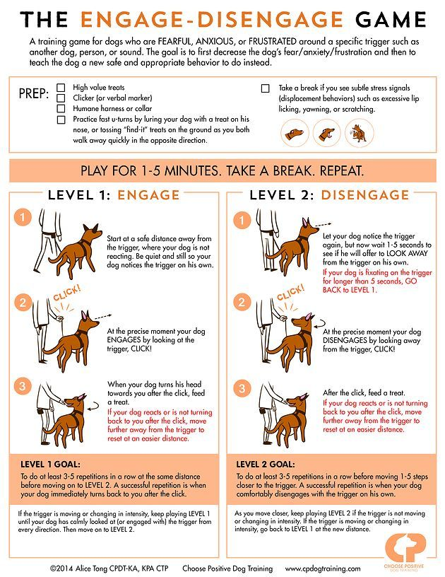 Choose Positive Dog Training   The Practice of Self-Interruption: The Engage-Disengage Game