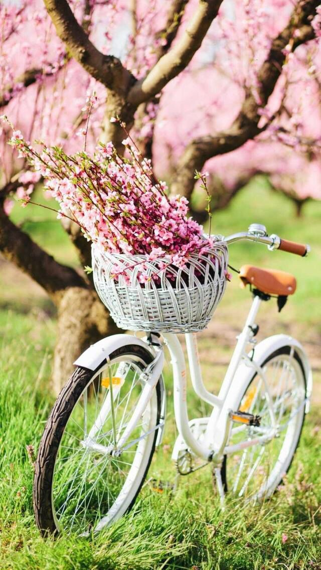 Nature Wallpaper Iphone Flowers With Images Spring Blossom Peach Blossoms Spring
