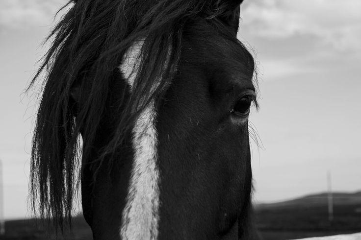 Black & White Photography by Lisa E Adams