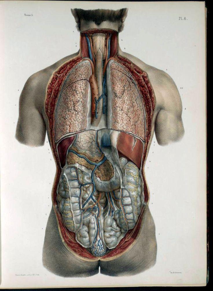 9 best Vesalio images on Pinterest   Andreas vesalius, Anatomía y ...