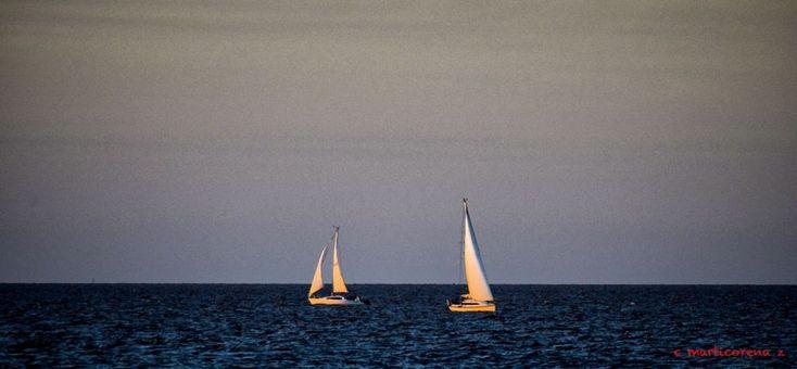 Navigator by cecilia marticorena