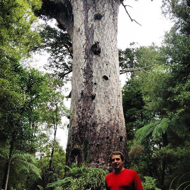 Tane Mahuta in Waipoua Forest, Dargaville